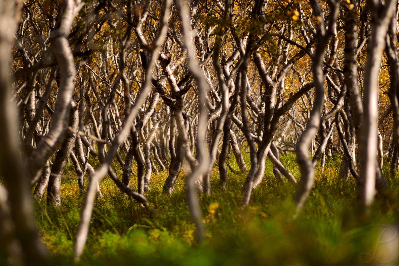 Bizarre Forest